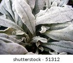 close up of frozen plant | Shutterstock . vector #51312