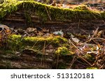 natural old wood   bark in moss | Shutterstock . vector #513120181