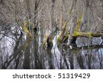 Old dead trees with fungus in a swamp - stock photo