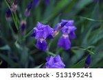 wildflowers    Shutterstock . vector #513195241