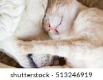Stock photo cat and dog sleeping together portrait closeup 513246919
