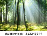 beautiful morning in the forest | Shutterstock . vector #513249949