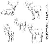 deer sketch. pencil drawing by... | Shutterstock .eps vector #513250114