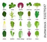 green salad leaves. vector... | Shutterstock .eps vector #513279247