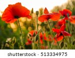 Red Poppies In The Morning...