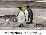 A Pair Of King Penguins ...