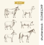 farm animals collection. vector ... | Shutterstock .eps vector #513481249