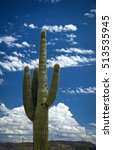tall and beautiful saguaro... | Shutterstock . vector #513535945