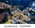 healthy coral reef | Shutterstock . vector #51354400