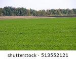 winter wheat october field   Shutterstock . vector #513552121