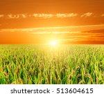 ripe rice on farmland at sunset | Shutterstock . vector #513604615