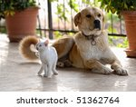 Stock photo dog and cat 51362764