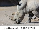 rhinoceros are killed by humans ... | Shutterstock . vector #513643201
