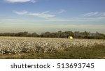 defoliated cotton plants in a...   Shutterstock . vector #513693745