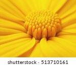 Macro Shot Maxican Sunflower ...