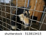 Abandoned Dog In The Kennel...