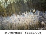 hoarfrost on grass. frosted... | Shutterstock . vector #513817705