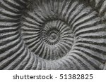 Ammonite Fossil Background