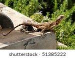 lizard | Shutterstock . vector #51385222