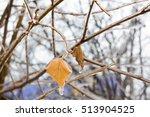 Yellow Dried Birch Leaf On A...
