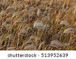 reed | Shutterstock . vector #513952639