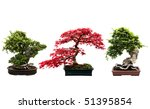 Trio Of Bonsai Trees Isolated...