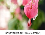 Soft abstract image of beautiful bleeding heart flowers.  Macro with extremely shallow dof. - stock photo