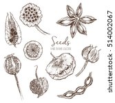 Set Of Hand Drawn Seeds  Pods...