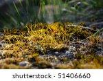 yellow grass closeup | Shutterstock . vector #51406660