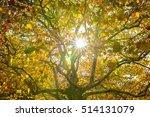 platanus   Shutterstock . vector #514131079