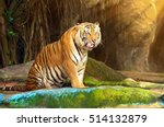 tiger is the king of the jungle.... | Shutterstock . vector #514132879