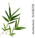 bamboo leaves isolated on white ... | Shutterstock . vector #514186735