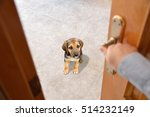 shot of a dog enclosed at the...   Shutterstock . vector #514232149