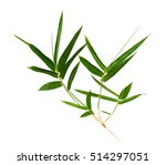 green bamboo branch isolated on ... | Shutterstock . vector #514297051