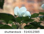 a large flower on a background... | Shutterstock . vector #514312585
