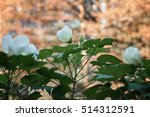a large flower on a background... | Shutterstock . vector #514312591