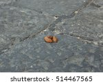 Dog Excrement In The Street...