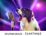 rockstar border collie dog...   Shutterstock . vector #514474465