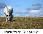 White Horse In A Field Grazing...
