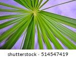 beautiful fresh green leaves of ... | Shutterstock . vector #514547419