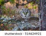Aggressive Owl In Attack ...