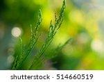 grass | Shutterstock . vector #514660519