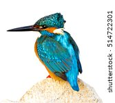 Small photo of isolated bird kingfisher on white background Common Kingfisher / Alcedo atthis