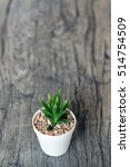 Small photo of The small cactus on retro wood table. Filter pallid color