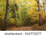 Path Through The Autumn Forest.