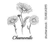 hand drawn chamomile flowers | Shutterstock .eps vector #514814395