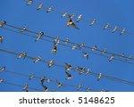 birds  martlet  sitting on... | Shutterstock . vector #5148625