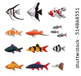 collection of freshwater fishes ... | Shutterstock .eps vector #514868551