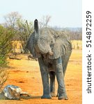 Small photo of African elephant with elevated trunk smelling its surroundings