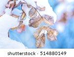 Macro Winter Outdoor Frozen...